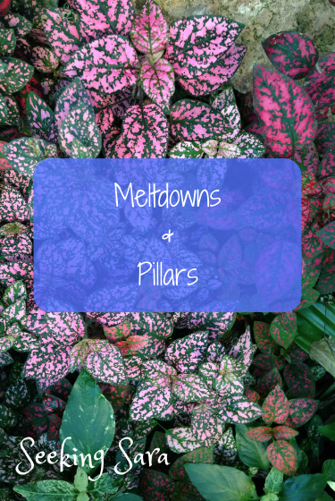 "A patch of Polka Dot plants, dark green plants with splotches of bright pink polka dots. The pink is vibrant and bright. Text reads, ""Meltdowns and Pillars"""