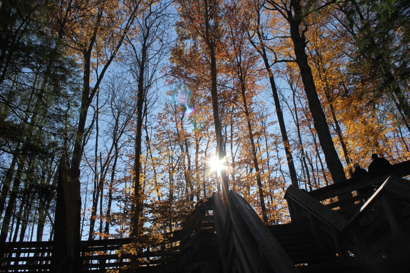 A picture taken in the woods during fall when the trees are radiant orange. The sun shines through the trunks toward the viewer.